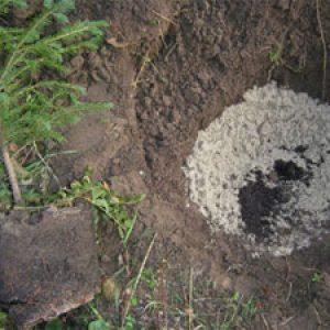 Перевалка ели в яму