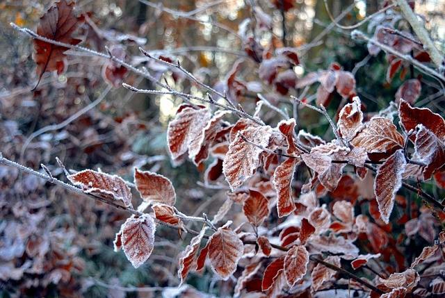 Народные приметы о погоде ноября