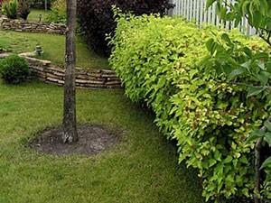 Стрижка живой изгороди