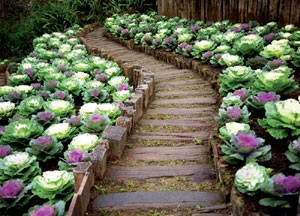 Огород в цветнике