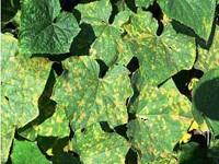 Мозаика листьев
