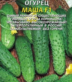 Семена огурцов Маша