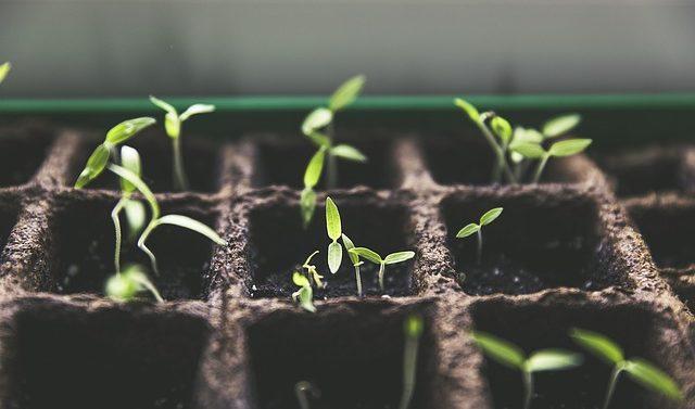 Время сажать рассаду