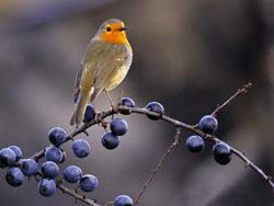 Птица на даче