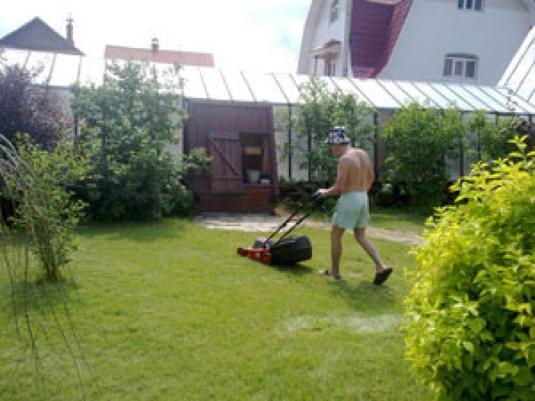 Как вырастить хороший газон на даче