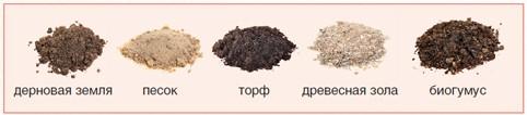 Состав почвы для посадки земляники