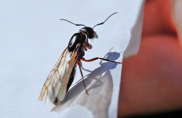 Летающие муравьи
