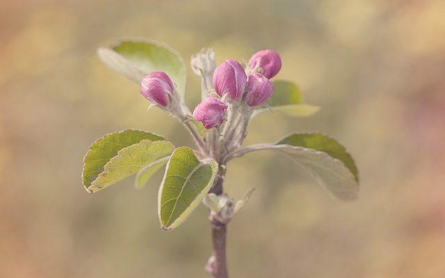 Защитить сад от весенниз заморозков