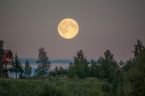луна для садовода