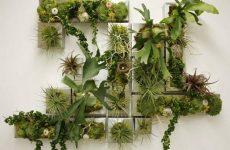 Вертикальные сады. Саженцы цветов в интернет магазине