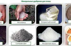 Минеральные удобрения для почвы и их характеристики