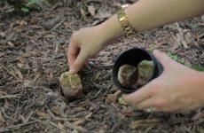 Как я чаем растения поила или для чего чай в саду