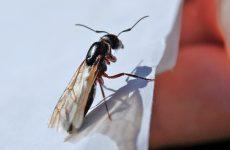Летающие муравьи в доме
