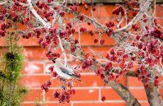Птичьи голоса — услада дачнику