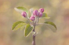 Как защитить сад от весенних заморозков