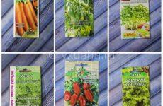 Огород на балконе: 6 растений для выращивания новичку