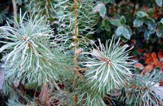 Сезонные работы в саду — Ноябрь