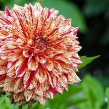 Фото однолетних цветов
