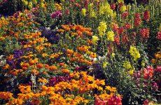 Устройство цветника на садовом участке