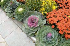 Что выбрать — цветы или овощи? Огород в цветнике!
