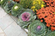 Что выбрать – цветы или овощи? Огород в цветнике!