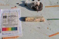 Как определить плодородие почвы
