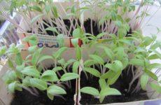 Март — время сажать семена томатов, перцев, баклажан