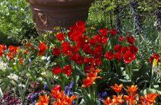 Весенние цветы или цветник в мае