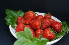 Земляника садовая: выращивание и уход