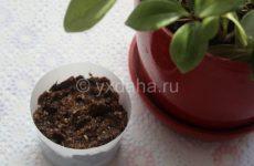 Универсальное удобрение для цветов на банановой кожуре