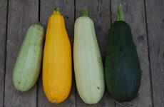 Как посадить и вырастить кабачки