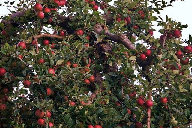 Формирование старой яблони