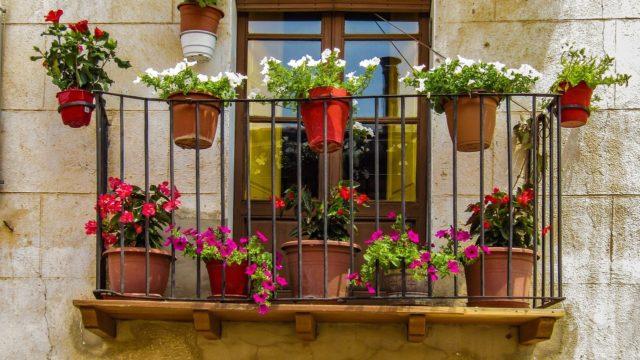 Цветы в горшках на балконе