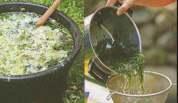 Подкормка для садовых растений