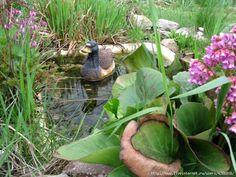 Водоем для лягушек