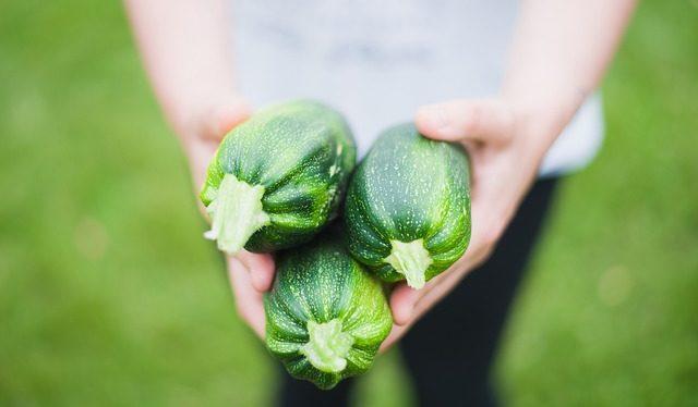 Вырастить цукини на компостной гряде