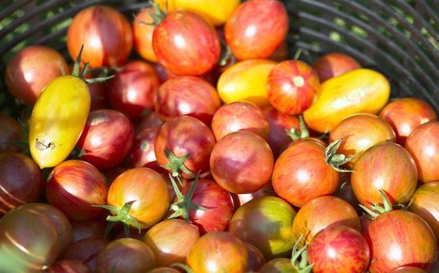 Какие томаты выбрать для посадки