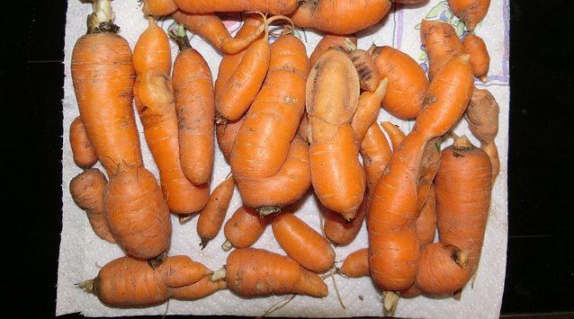 Плохая морковь