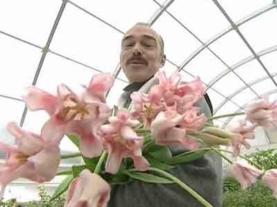 Авторские сорта тюльпанов