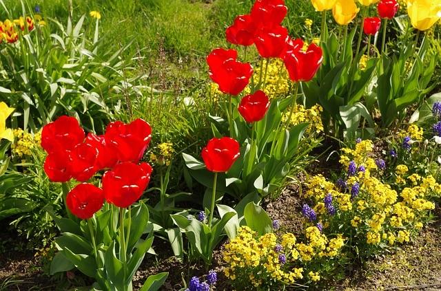 Вырастить тюльпаны