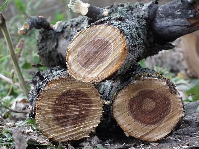 Техника спиливания дерева