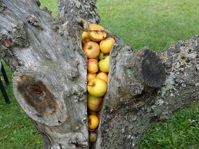 Удаление старой яблони