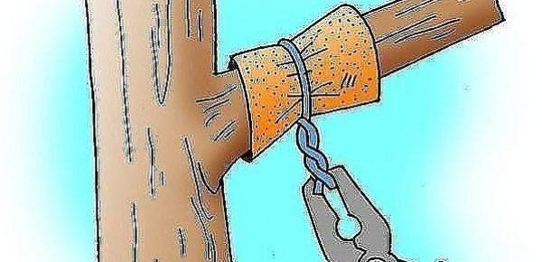 Перетяжка ветвей на яблоне