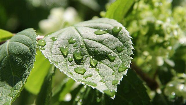 Дождь в июне