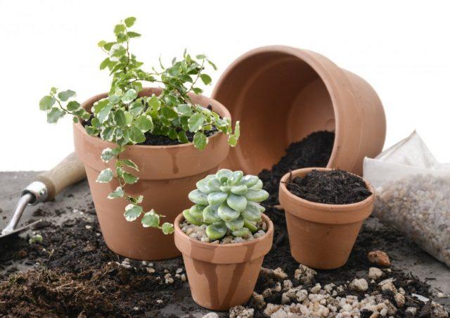 Как выбрать субстрат для комнатных растений