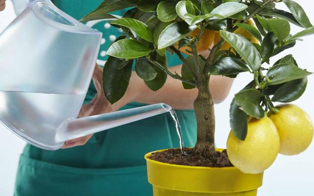 Вода для комнатных растений