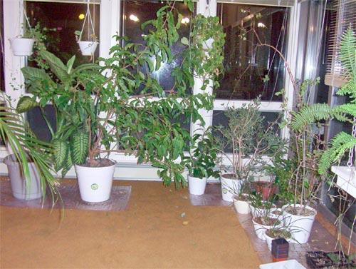 Зимний отдых для растений