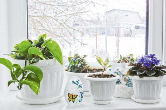 Растения в зимней спячке