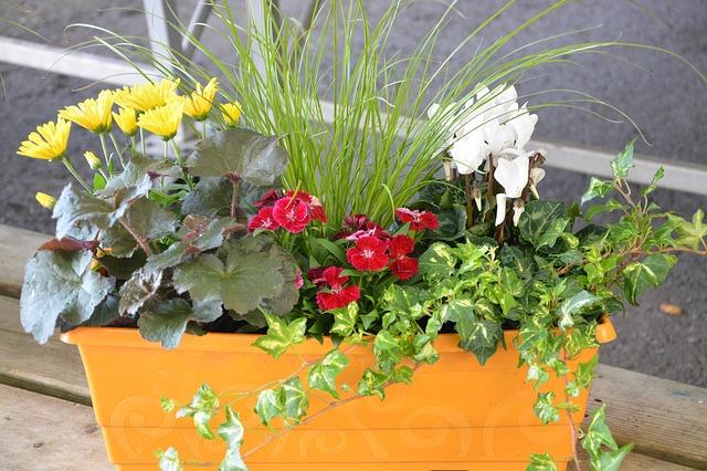 Цветы для очитски воздуха