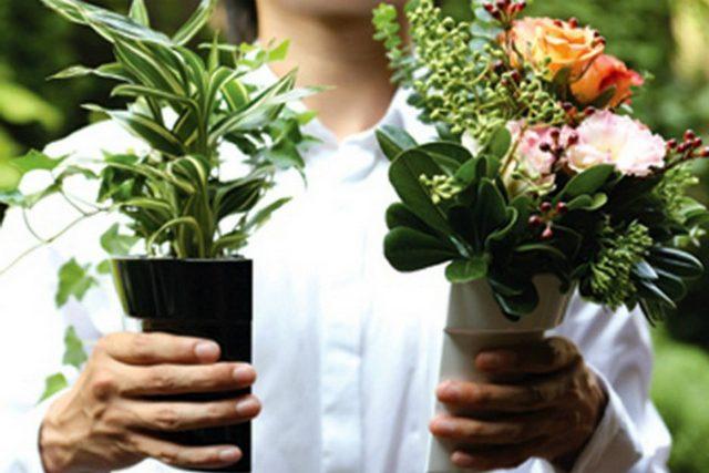 Когда приобретать цветы